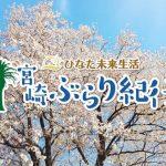 【宮崎ぶらり紀行】樹齢150年|長寿|一本桜|宮崎県|国富町|満開|