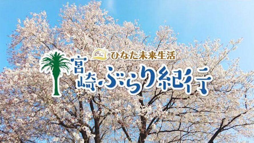 【宮崎ぶらり紀行】樹齢150年 長寿 一本桜 宮崎県 国富町 満開 